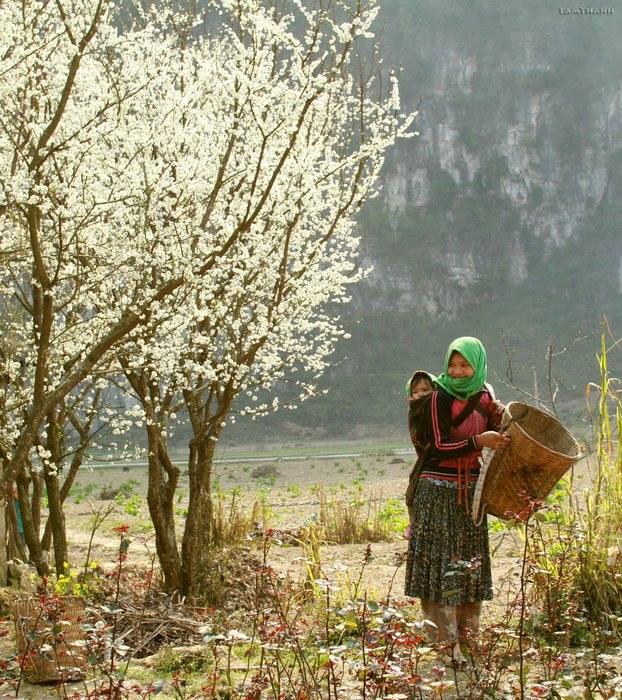 Đến Hà Giang mùa xuân, ngẩn ngơ nhìn đá nở hoa - 3