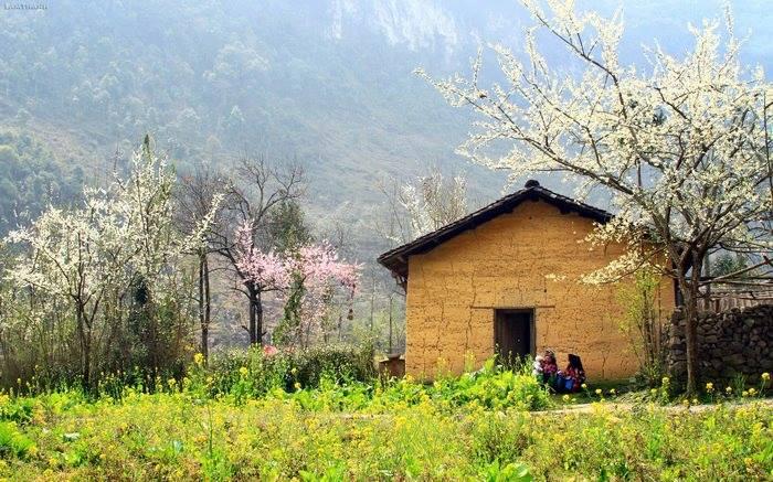 Đến Hà Giang mùa xuân, ngẩn ngơ nhìn đá nở hoa - 6