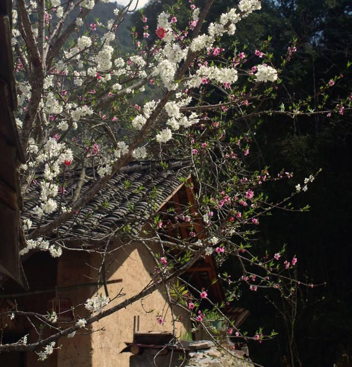 Đến Hà Giang mùa xuân, ngẩn ngơ nhìn đá nở hoa - 7