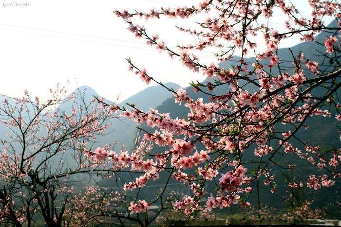 Đến Hà Giang mùa xuân, ngẩn ngơ nhìn đá nở hoa - 8