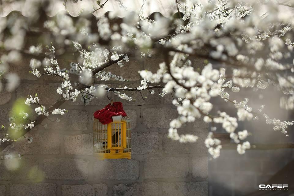 Đến Hà Giang mùa xuân, ngẩn ngơ nhìn đá nở hoa - 9