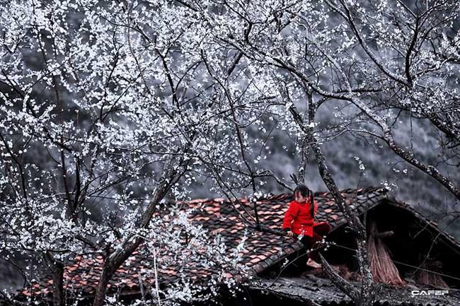 Đến Hà Giang mùa xuân, ngẩn ngơ nhìn đá nở hoa - 10