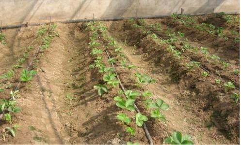 Ba tuyệt chiêu giúp bạn trở thành tỷ phú kể cả phải trồng rau - 1