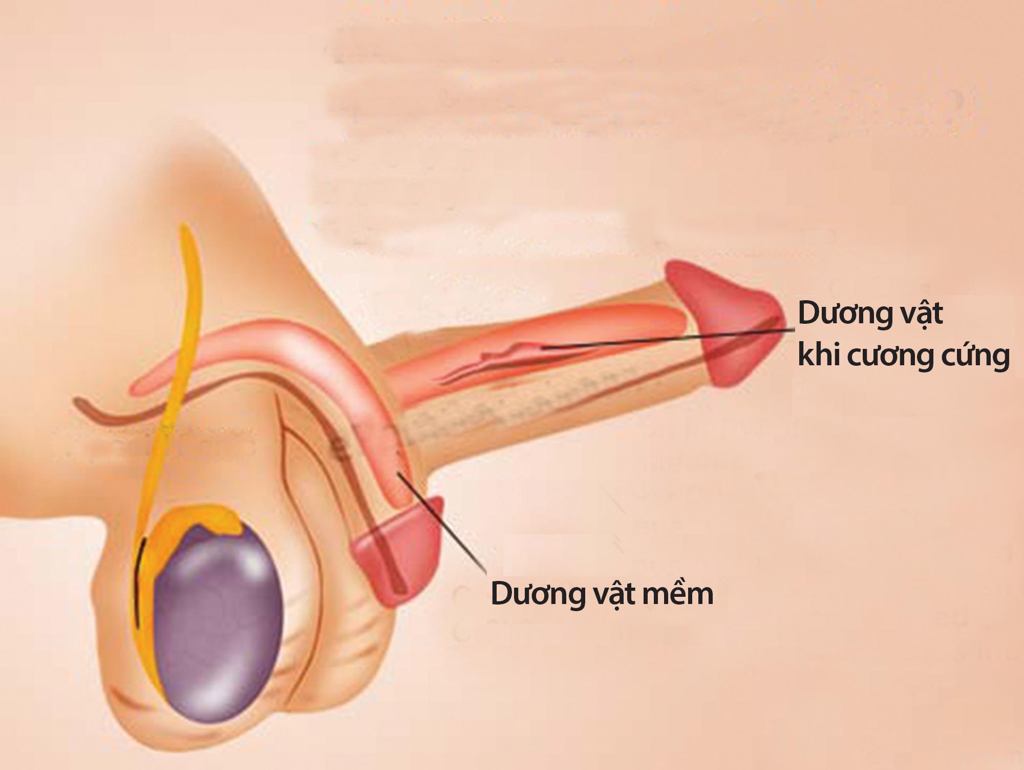 Nhận diện rối loạn hoạt động tình dục ở nam giới - 2
