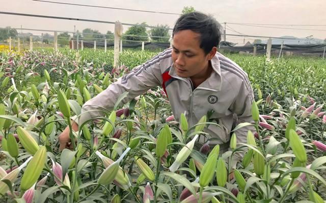 Vườn hoa tiền tỷ của chàng công nhân gác tàu xứ Thanh - 2