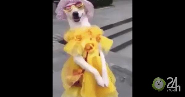 Khi các hoa hậu cún đua nhau khoe sắc