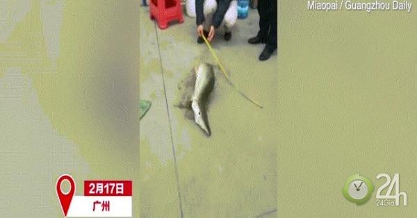Thủy quái nửa rắn nửa rùa xuất hiện ở hồ Trung Quốc