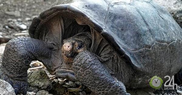 Loài vật tuyệt chủng 100 năm trước bỗng tái xuất ở Ecuador