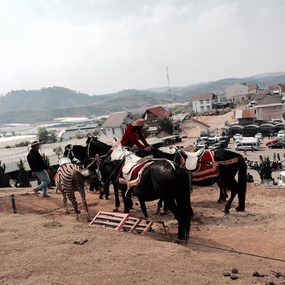 Du lịch Đà Lạt chỉ với 2,5 triệu anh chàng 9X khiến dân mạng trầm trồ không tin nổi - 9