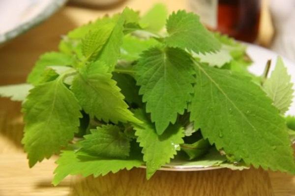Những tác dụng chữa bệnh thần kỳ của loại rau thơm