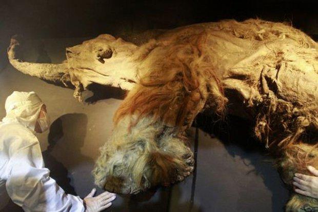 Bước đột phá giúp hồi sinh voi ma mút thời tiền sử trên Trái đất - 2