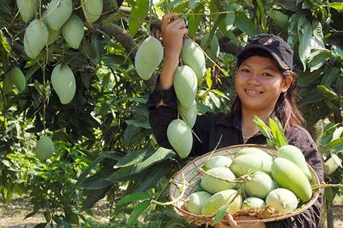 Trai-cay-Viet-Nam-1-1552635142-326-width500height333.jpg