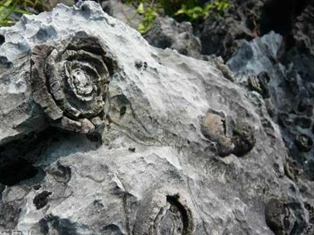 Cảnh tượng đá nở hoa có 1-0-2 tại Trung Quốc - 5