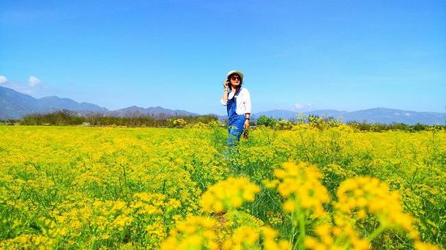 """Check-in liền tay có ngay ảnh đẹp tại """"cánh đồng hoa thì là"""" Ninh Thuận - 3"""