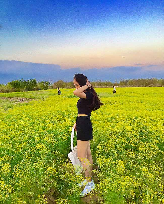 """Check-in liền tay có ngay ảnh đẹp tại """"cánh đồng hoa thì là"""" Ninh Thuận - 4"""