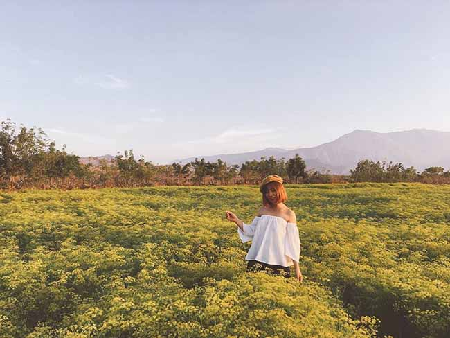 """Check-in liền tay có ngay ảnh đẹp tại """"cánh đồng hoa thì là"""" Ninh Thuận - 6"""