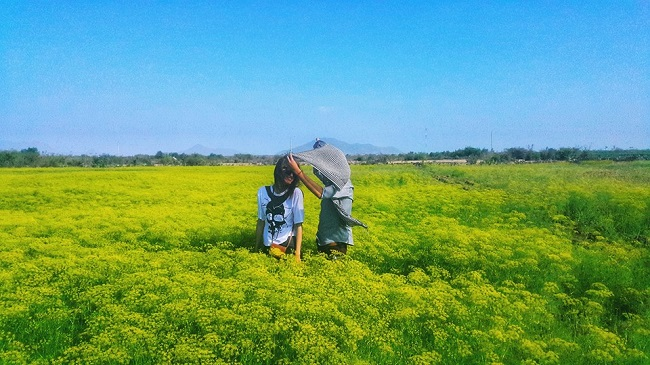 """Check-in liền tay có ngay ảnh đẹp tại """"cánh đồng hoa thì là"""" Ninh Thuận - 8"""