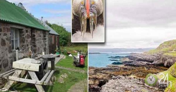 Bạn có đồng ý dành cả thanh xuân sống trên hòn đảo này để nhận lương lên tới 4 tỷ/năm?