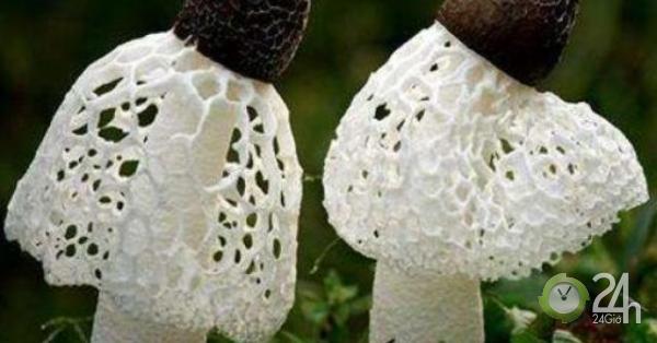 """""""Nấm cô dâu"""", loại nấm chuyên dùng trong quốc yến nhưng giá"""