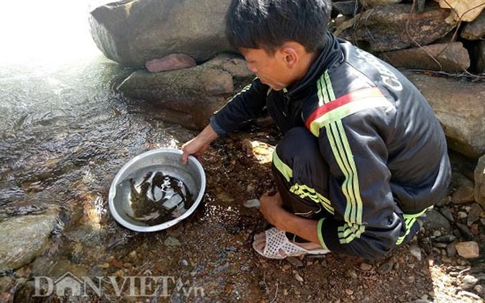 """Tứ """"độc"""" đặc sản cá cực hiếm ở miền núi, có tiền cũng khó mua - 19"""