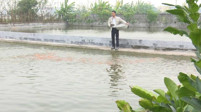 """Thái Bình: Hàng vạn con cá chép chết """"đỏ ao"""" trước dịp ông Công, ông Táo - 1"""