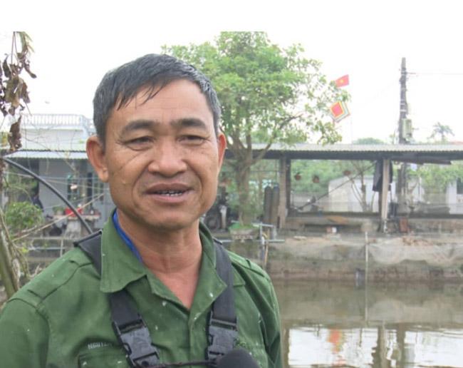 """Thái Bình: Hàng vạn con cá chép chết """"đỏ ao"""" trước dịp ông Công, ông Táo - 3"""