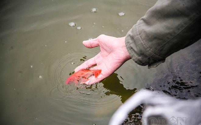 Những cấm kị khi phóng sinh cá chép tiễn ông Táo về trời mà bạn không thể bỏ qua - 3