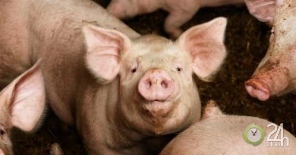 Ba Lan: Người đàn ông biến mất bí ẩn ở trang trại nuôi lợn, chỉ còn lại xương-Thế giới
