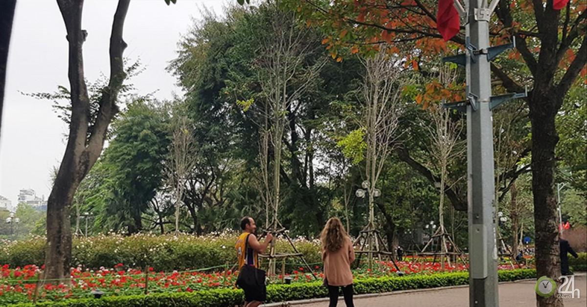 Hà Nội: Lèo tèo hoa, cây cảnh trang trí Tết - Tin tức 24h