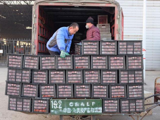 """200.000 đồng một cây cải bắp, TQ """"căng mình"""" đảm bảo lương thực cho người dân - 1"""