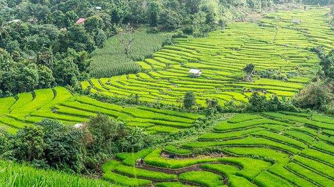 Những lý do tại sao bạn nên ghé thăm Chiang Mai - 6
