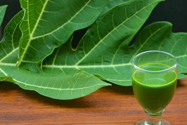 20 tác dụng chữa bệnh thần kỳ của loại lá đắng ngắt, 90% người Việt vứt bỏ - 6