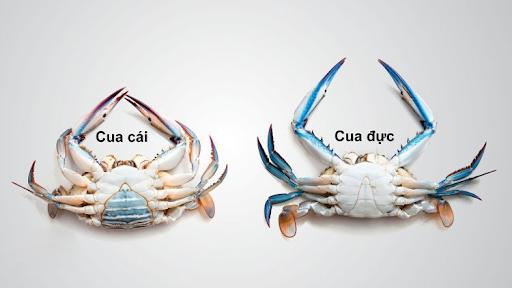 2 cách nấu lẩu cua đồng, biển siêu ngon như ngoài hàng - 1