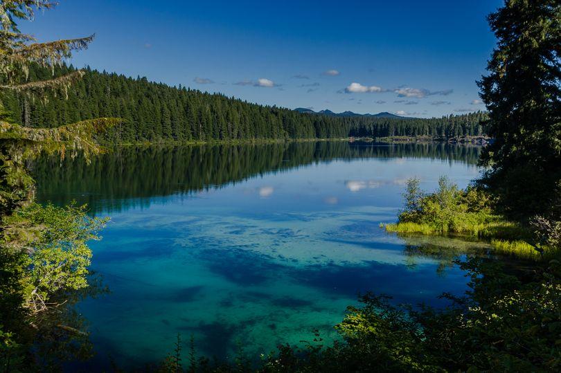 Khám phá hồ nước ẩn chứa cả khu rừng cổ xưa - 1
