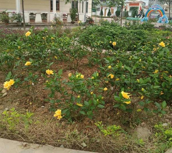 Muôn hoa khoe sắc trong khu cách ly công dân ở Hà Tĩnh - 5