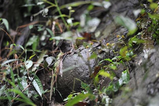 """Kỳ lạ vách đá cứ 30 năm """"đẻ trứng"""" 1 lần - hình ảnh 7"""
