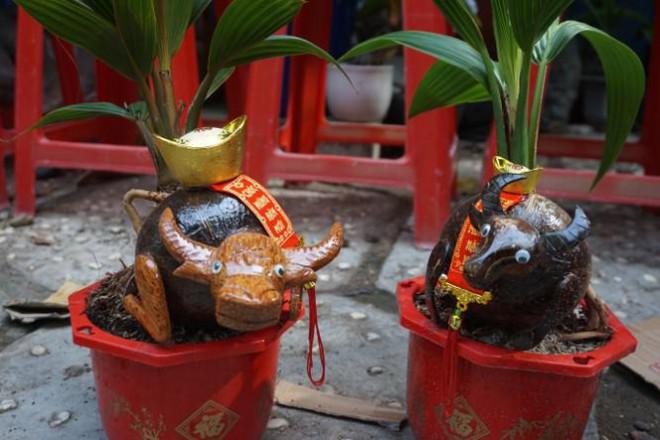 Độc đáo bonsai dừa tạo hình con trâu đón Tết Tân Sửu 2021 - 3