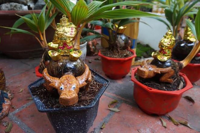 Độc đáo bonsai dừa tạo hình con trâu đón Tết Tân Sửu 2021 - 1