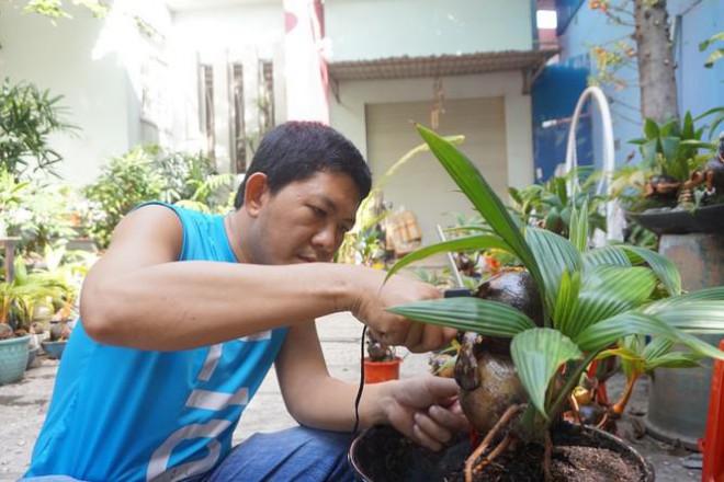 Độc đáo bonsai dừa tạo hình con trâu đón Tết Tân Sửu 2021 - 9