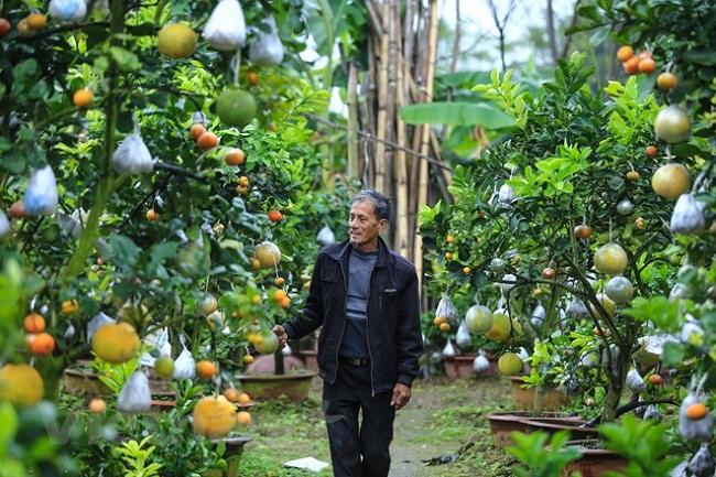 """Vườn cây bạc tỷ """"Thập toàn thập mỹ"""" của lão nông hút khách mỗi dịp Tết về - 4"""
