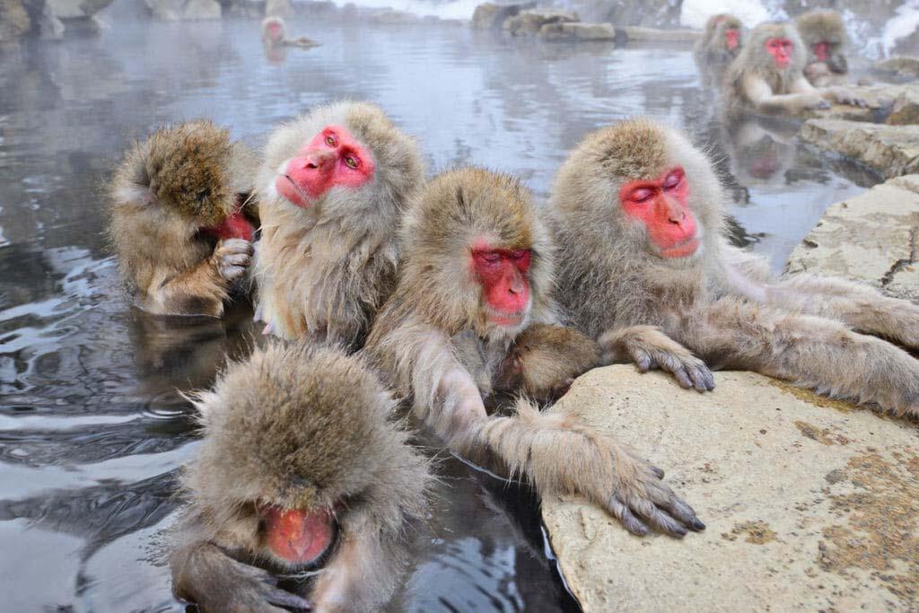 7 địa danh kỳ lạ nhất ở Nhật Bản, du khách đến rồi chỉ muốn quay lại lần nữa - hình ảnh 3