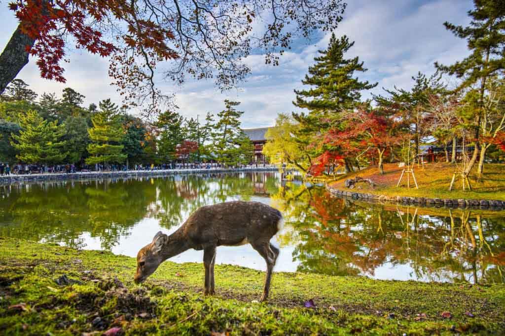 7 địa danh kỳ lạ nhất ở Nhật Bản, du khách đến rồi chỉ muốn quay lại lần nữa - hình ảnh 6