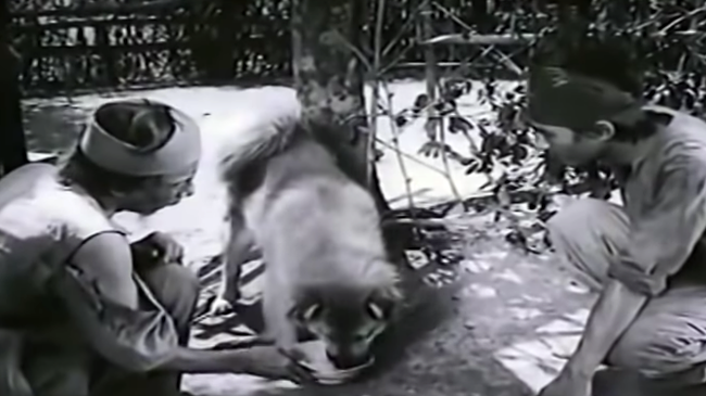 """Chó Shiba đóng Cậu Vàng bị """"tẩy chay"""", khán giả gọi tên những chú """"chó cỏ"""" này - hình ảnh 4"""