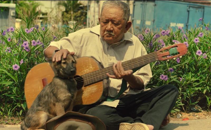 """Chó Shiba đóng Cậu Vàng bị """"tẩy chay"""", khán giả gọi tên những chú """"chó cỏ"""" này - hình ảnh 11"""