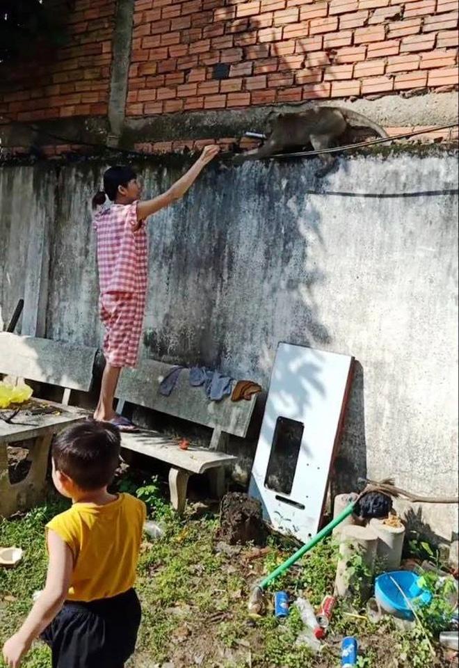 Bắn thuốc mê di dời đàn khỉ trong khu dân cư ở Sài Gòn - hình ảnh 4