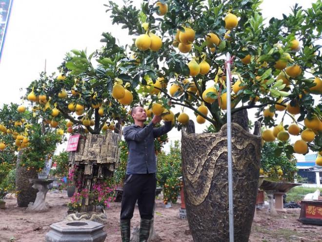 Cây cảnh... lãnh đủ: Ma trận bonsai - 1