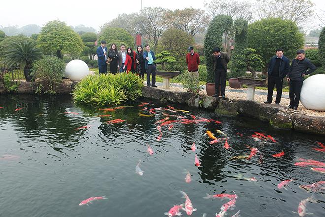 Hồ cá Koi sử dụng nhiều đá bán quýlớn nhất Việt Nam - 10