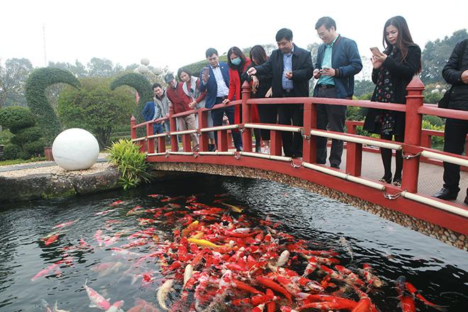Hồ cá Koi sử dụng nhiều đá bán quýlớn nhất Việt Nam - 11