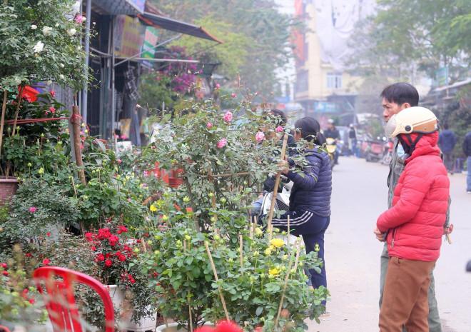 Hà Nội: Giá chỉ từ 500.000 đồng/chậu hoa hồng đẹp xao xuyến chờ khách chơi Tết - 1