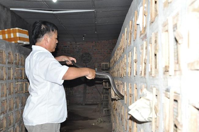 Hàng nghìn con rắn hổ mang bị bỏ đói vì người nuôi cả năm không có nguồn thu, không có tiền mua thức ăn.